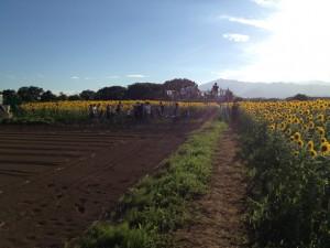 ひまわり畑の展望台